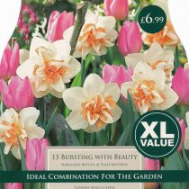 NARCISSI BURSTING WITH BEAUTY XL