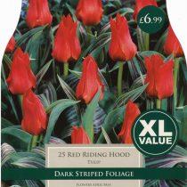 TULIP RED RIDING HOOD XL