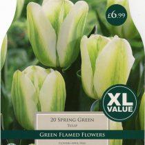 TULIP SPRING GREEN XL