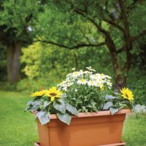 Flower Box 520 x 195 x 155mm Terracotta (with Tray)